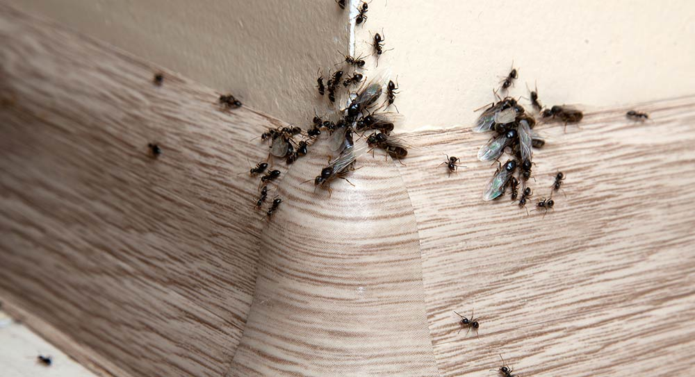 Protect Your Home From Ants